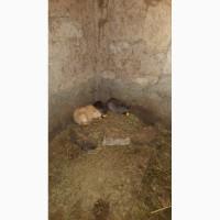 Продам нутрии и кроликов