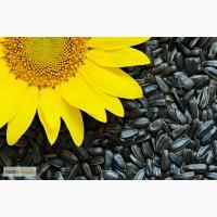 Продам семечки подсолнечника крупноплодного Лакомка 38