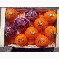 Апельсины оптом из Испании