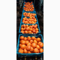 Продаем апельсины, мандарины