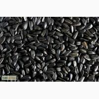 Продам на постоянной основе калиброванные семена подсолнечника
