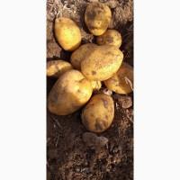 Картофель от 0.19 usd