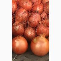 Продам лук. Sales Onion