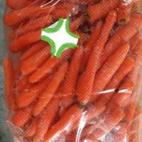 Морковь оптом из Сербии