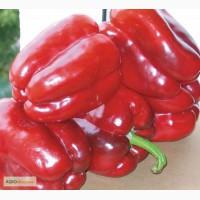 Продам семена перца клаудио f1