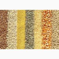 Продаем зерно из России