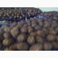Продам картофель, сорт Гала, Лаперла, калибр 5