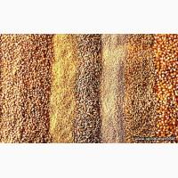 Зерноотходы для корма животных