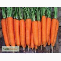 Продам семена Моркови сорт Элеганс