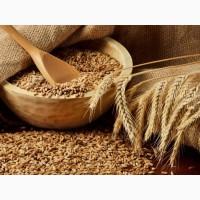Семена озимой пшеницы, ячменя в Краснодарском крае