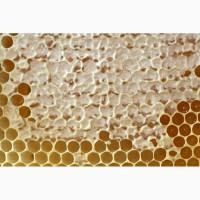 Продам мед 2019 - подсолнух gt;gt;500кг