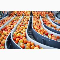 Oferim servicii de spălare și sortare a mărului / Предлагаем услуги сортировки яблок