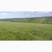 Caut partener in Republica Moldova cultivare coriandru