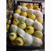 Оптовая продажа лимон из Турции