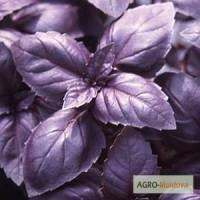 Базилик фиолетовый Опал продам