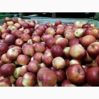 Продам хорошое яблоко с Польши