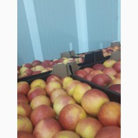 Продам яблоки Golden, Idared 2ой сорт