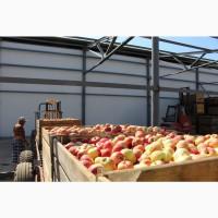 Яблоки от производителя на экспорт / Mere de la producător pentru export